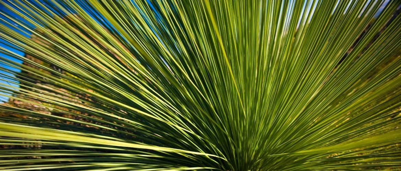 grasstree-500